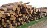А Вы знали, что каждому россиянину по закону полагается 150 кубов леса бесплатно?