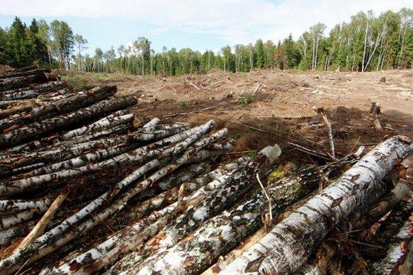 Россию назвали мировым лидером по сокращению лесов